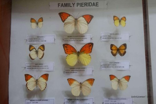 2-bantimurung-leang-leang-kupu-kupu