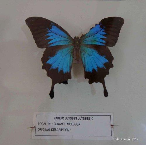 3-bantimurung-leang-leang-kupu-kupu
