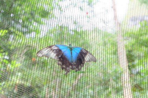 4-bantimurung-leang-leang-kupu-kupu